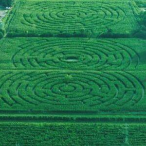 Il labirinto di mais di Alfonsine, di Carlo Galassi